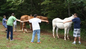 Group Horse Therapy lends many opportunities for passing lessons learned to a friend.